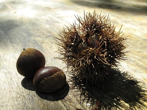 koreanfood_20121014_2_4