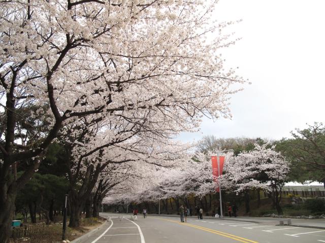 life in korea_20140413_1