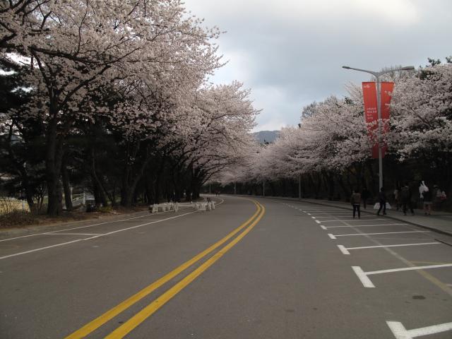 life in korea_20140413_3