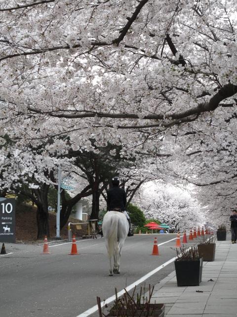 life in korea_20140413_5