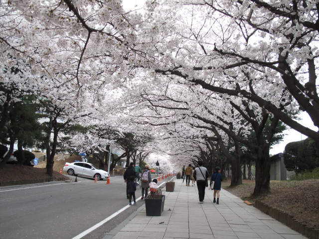 life in korea_20140413_6