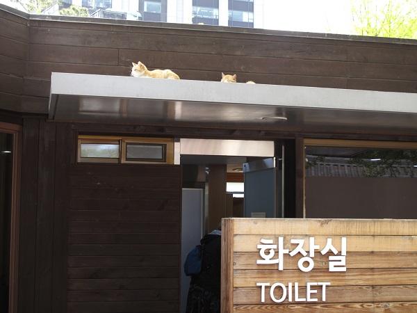 life in korea_20150219_2