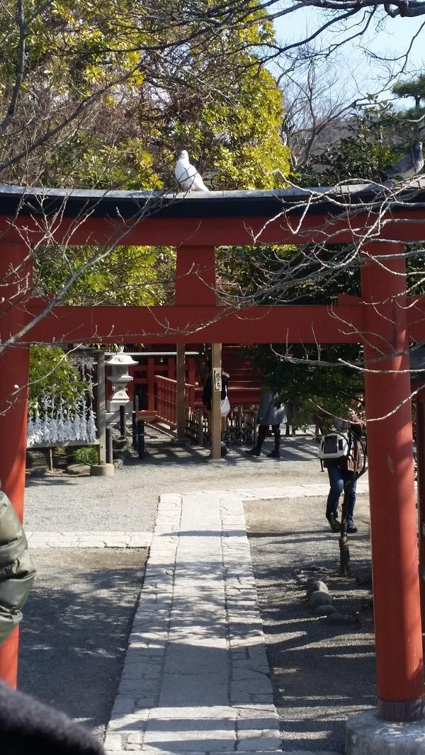 in japan_20160314_4