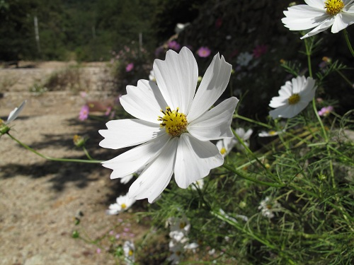 photo_20121007_2_10