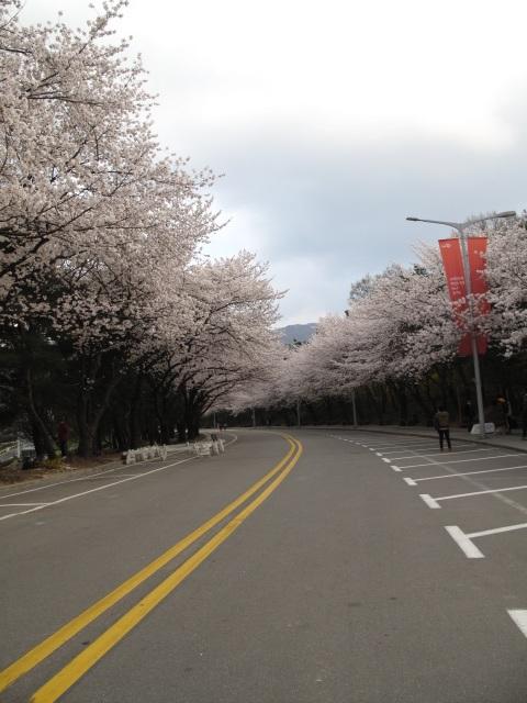 life in korea_20140413_4