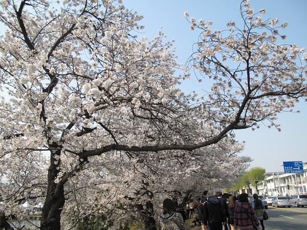 life in korea_20150211_1