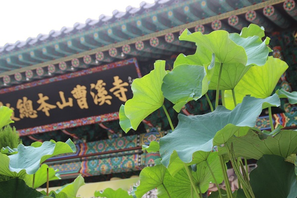 life in korea_20150905_1